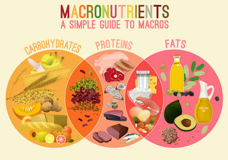 Illustration pour Main food groups - macronutrients. Carbohydrates, fats and proteins in comparison. Dieting, healthcare and eutrophy concept. Vector illustration isolated on a lighr beige background. Landscape poster. - image libre de droit