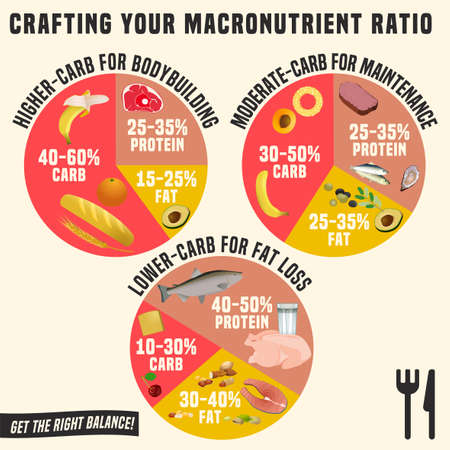 Vektor für Crafting your macronutrient ratio. Fat loss, bodybuilding and health maintenance diets diagrams. Colourful vector illustration isolated on a light beige background. Healthy eating concept. - Lizenzfreies Bild