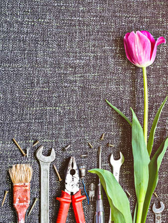 Photo pour Various tools (pliers, screwdrivers, old brush, wrenches, a lamp with a ragged wire) and a tulip on a fabric background. Illustration or background to the Father's day, labor day ... - image libre de droit