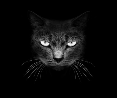 Muzzle a cat on a black .