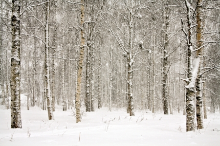 Snowy landscape with birch trees