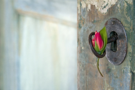 Green old wooden door opening with light shining through and red rose hanging from an old key