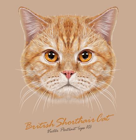 Ilustración de Vector Portrait of Domestic Cat. Orange British Short hair cat with copper eyes. - Imagen libre de derechos