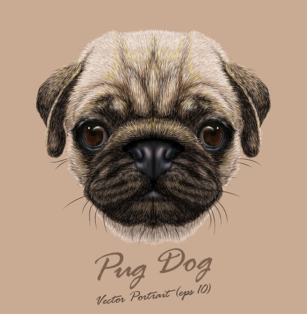 Vector Portrait of Pug Dog. Cute young dog.
