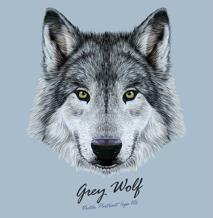 Ilustración de Vector Illustrative Portrait of Wolf. Beautiful gazing face of Gray Wolf with green eyes. - Imagen libre de derechos
