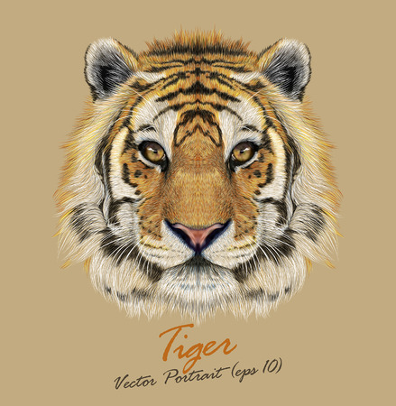 Vector Portrait of a Tiger. Beautiful face of big cat.