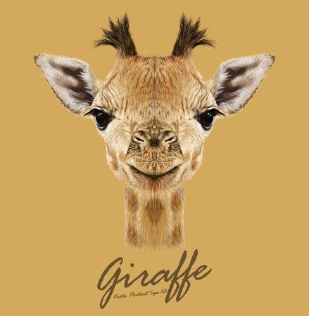 Ilustración de Vector Illustrative portrait of Giraffe.Cute attractive face of young giraffe with horns. - Imagen libre de derechos