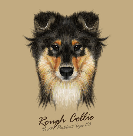 Vector Illustrative Portrait of Collie Dog. Cute Face of Mahogany Sable Rough Collie or Shetland Sheepdog Sheltie.