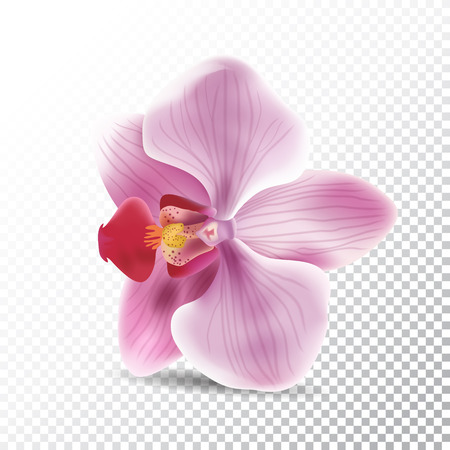 Vector realistic illustration of orchid pink flower.