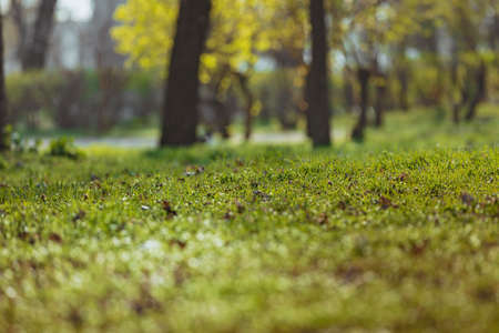 Photo pour Spring green grass park background - image libre de droit