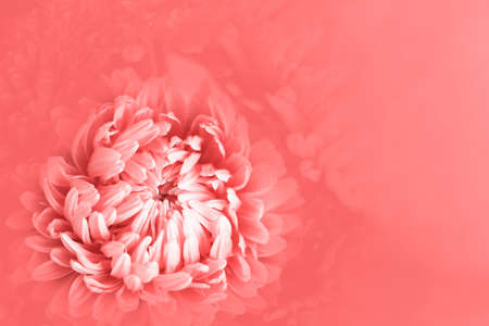 Photo for Background in soft and blurred style. Sprind, Mothers Day, Women's Day and wedding concept. Selective focus. - Royalty Free Image