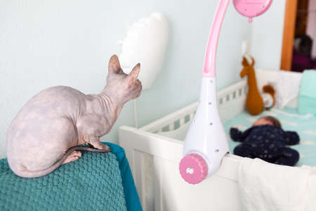 Bald sphynx cat mount guard over newborn baby sleeping in white bed, domestic bedroom