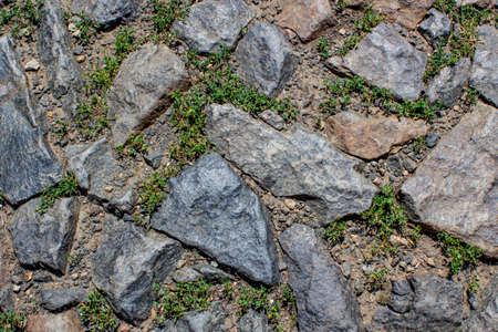 Photo pour Old abandoned road. Fragment of an  grass-covered cobblestone pavementGranite stones laid in the form of paving stones. Grass grew between the stones. Cobblestones in the form of uneven squares. Sunlight illuminates the clutch. Background, backdrop or texture. - image libre de droit