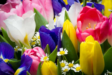 Photo pour Spring flowers in colorful bouquet, bunch of freshly picked pink and yellow tulips, blue and white irises and small camomile, nature background, selective focus - image libre de droit