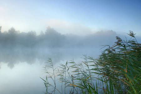 Morning mist over the forest lake