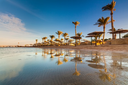 Beautiful sandy beach with palm trees at sunset. Egypt