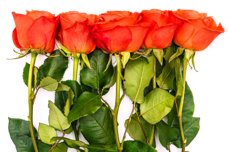 Foto de Summer background with red roses and green stems. Green leaves and flowers on a white background. Place for text. View from above. Romantic template - Imagen libre de derechos