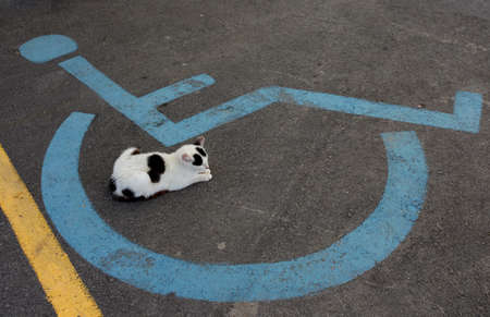 Wheelchair Handicap Sign on dark asphalt road and sleeping cat