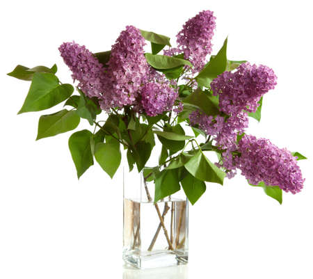 bouquet of spring purple Lilac in a vase isolated on a white background