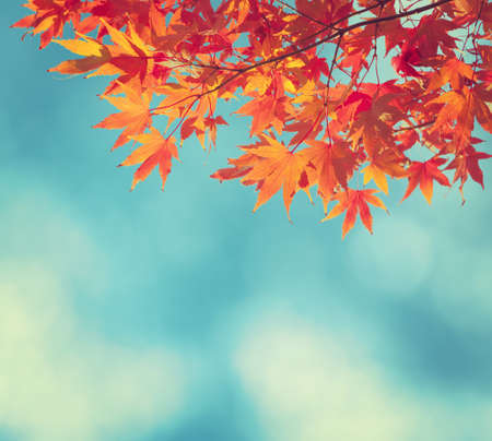 Colorful Autumn Leaves against blue skyの写真素材