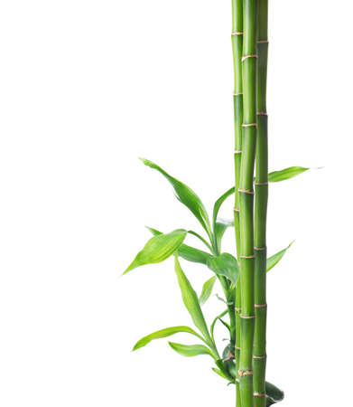 Photo pour Branches of bamboo isolated on white background. - image libre de droit
