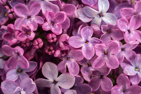 Foto für Floral background of  tiny flowers of Lilac. Flat lay.  Selective focus. - Lizenzfreies Bild