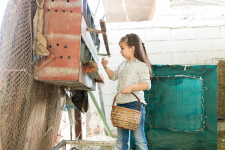 Photo pour Cute girl collecting eggs from chicken coop into basket at poultry farm - image libre de droit