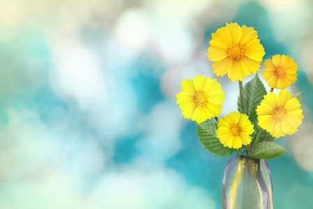 Beautiful live coreopsis bouquet bouquet in glass vase on sunny day with empty space for your content on nature leaves and branches bokeh background.