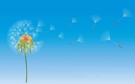 A dandelion in wind on blue background.