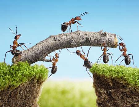 team of ants constructing bridge with log, teamwork