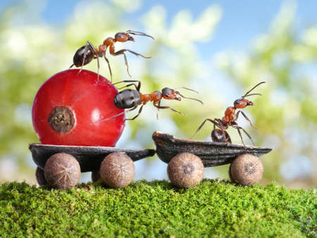 Photo pour team of ants delivers red currant with trailer of sunflower seeds, teamwotk - image libre de droit