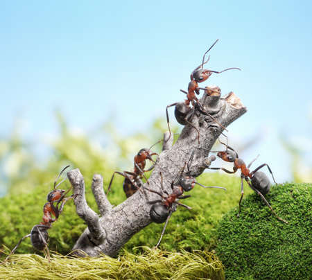 Foto de team of ants breaking down weathered tree, teamwork concept - Imagen libre de derechos