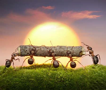 team of ants carry log on sunset or sunrise, teamwork concept