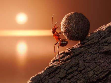 Photo pour ant Sisyphus rolls stone uphill on mountain, concept - image libre de droit