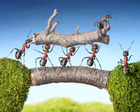 Photo pour team of ants carry log on bridge, teamwork concept - image libre de droit