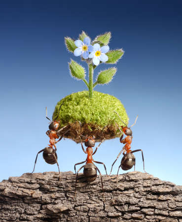 Photo pour ants bring piece of living nature at empty rock. Federal ant programs in some countries help forests to survive - image libre de droit