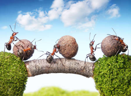 Photo for team of ants rolling stones on bridge, teamwork - Royalty Free Image