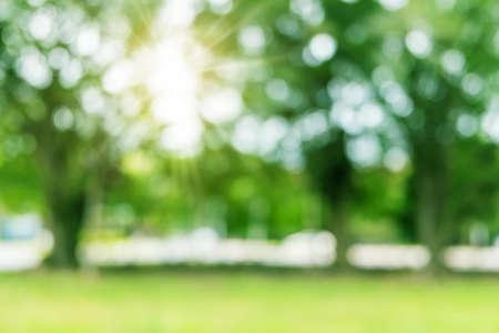 Foto de Blur nature bokeh green garden with tropical leaf copy space background. - Imagen libre de derechos