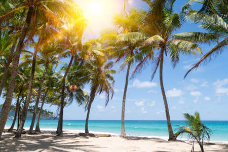 Photo pour Tropical nature clean beach and white sand in summer with palm tree leaf sun light blue sky and bokeh abstract  background. - image libre de droit