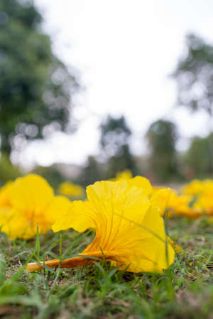 yellow flower fallen on the lawn