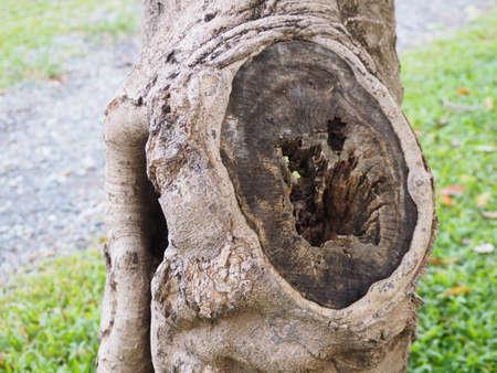 Woodcutting cavity