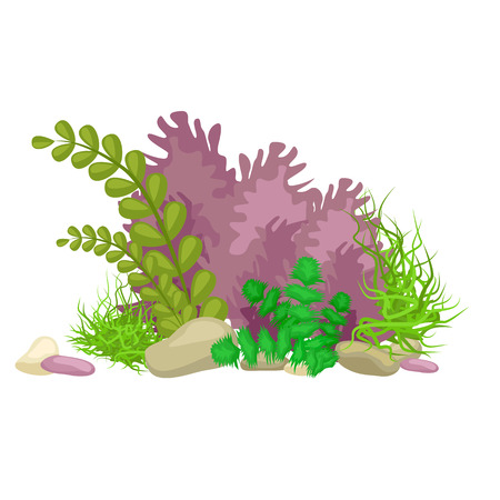 Illustration pour Seaweed, solated colorful corals and algae on a white background. Vector underwater flora and fauna. - image libre de droit