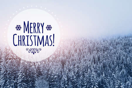 Foto de merry christmas card in winter snowy forest background - Imagen libre de derechos