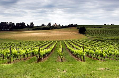 Aquitaine vineyard in France in springtime