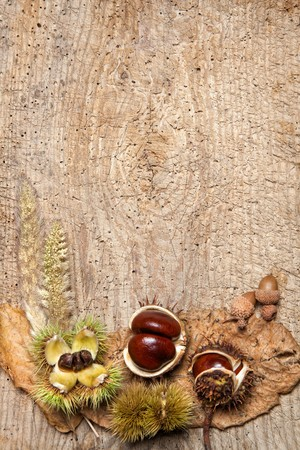 Decorative autumn border with chestnuts, and leaves and ample copy space