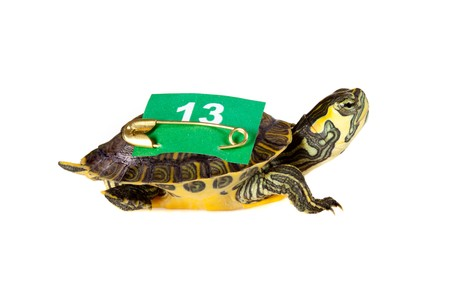 Funny turtle carrying a 13 number on his back for bad or good luck