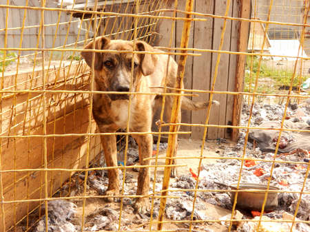 Adoption for pets. Abandoned dog in kennel at animal shelter