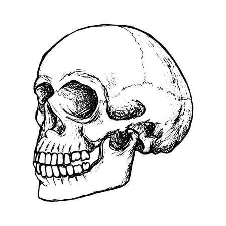 Illustration pour Sketch human skull side view, black outline on white background, stock vector illustration, for design and decoration, gothic, halloween, poster - image libre de droit
