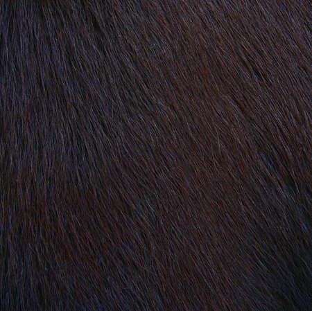 horse hairy texture, fur