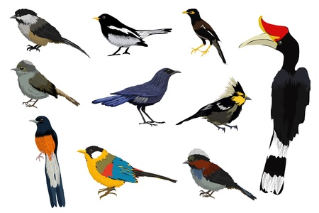 Vector illustration of a colorful bird collection